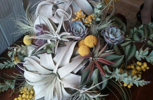 The Buzz About Succulents